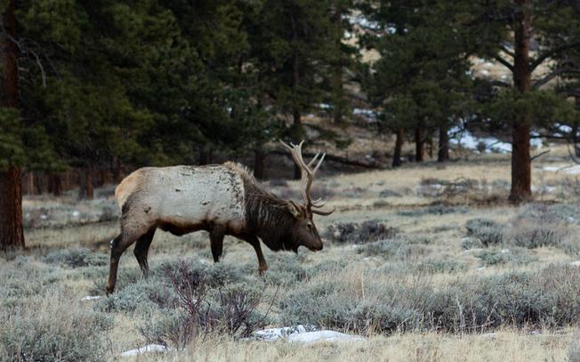 Estes Park Elk Adventure