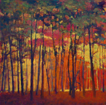View Through the Orange and Red Woods