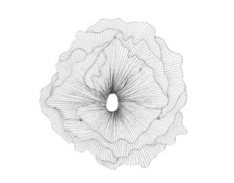 Silver & Black Poppy Flower
