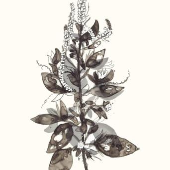 Transparent Floral IV