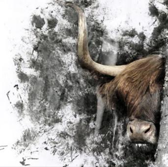 Highland Cow Inked