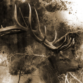 Elk in Ink