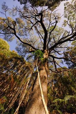 Pegarah Private Nature Reserve