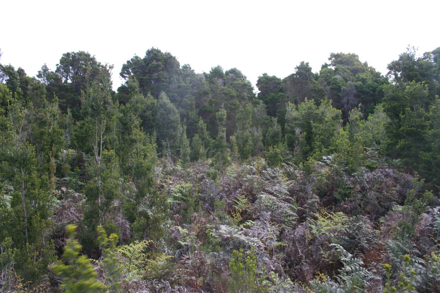 Pegarah Private Nature Reserve