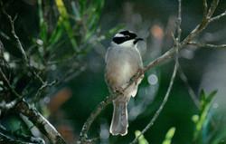 King Island Nature Reserve