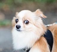 scared dog.jpg