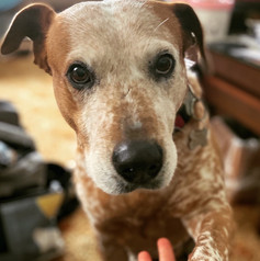 My elderly mother and I had the pleasure of meeting Kirsten this morning when she called in to trim nails. Nothing was too much trouble & we found Kirsten to be a very warm and caring person. We will definitely be using Kirsten in the future whenever we need a vet - cannot recommend highly enough.