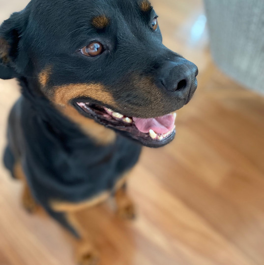 Dr Kirsten Aberle visited our sick Rottweiler today at Crafers. He was diagnosed and treated without any fuss. It is great to have a vet that actually comes to your home at the same price I would of paid if I had taken him to the local vet. Highly recommend.