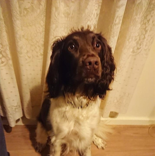 I called Dr Kirsten in regards to ear problems with my springer spaniel, Ben. The appointment was very easy to make and I was advised of prices so I knew what to expect. Prices were very good for a home visit. Communication was fantastic leading up to the appointment with advise on how to keep him comfortable until he could be seen to. When she arrived she was very friendly and very good with my dog who is easily excitable. She was very good at explaining what was wrong and how to treat it. She showed me how to put the ointment into his ear so I'd be able to do it myself. She gave very good clear instructions. And even texted a few days later to check progress. Billing was easily paid online with an emailed invoice. 10/10 from me and Ben and we recommend this service to others.