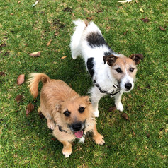 'Kirsten's visits are great, she has a good way of explaining dog behavior and some the challenges my terrier with high anxiety is facing. Kirsten is generous with her time, and my dogs like having her visit as well, always a good thing!'