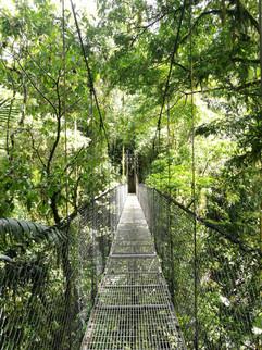 Pont suspendu Costa Rica.JPG