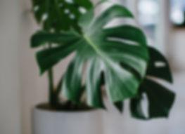 blurred-background-botanical-bright-2001