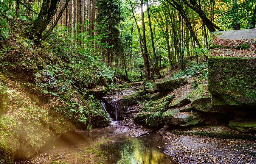 Im tiefen Wald I