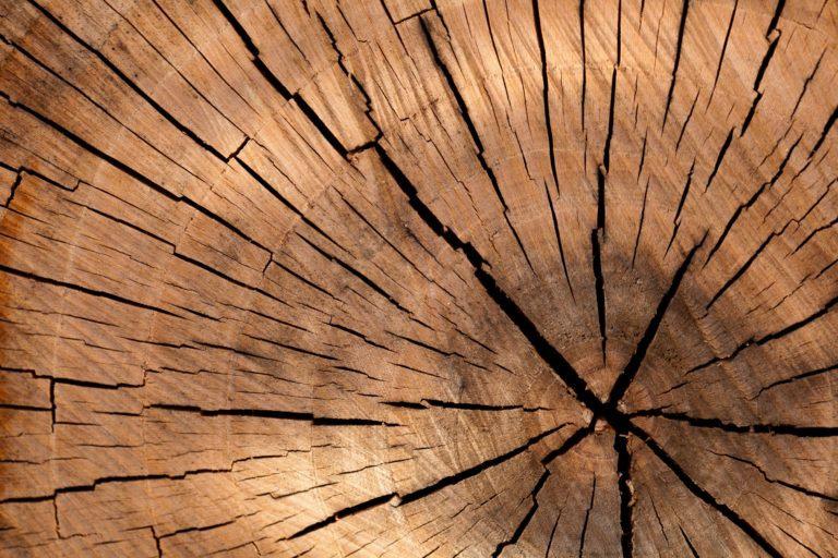 pattern-texture-tree-40973-768x512.jpg