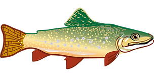 trout-294469_1280.png