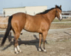 Apollitical-Toll-blazinfire-broodmare5.j