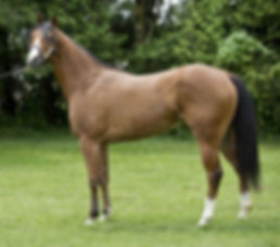 Apollitical-Toll-blazinfire-broodmare2.j