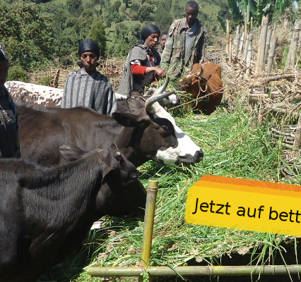 Jetzt für unseren Zuchtbullen auf betterplace.org spenden!
