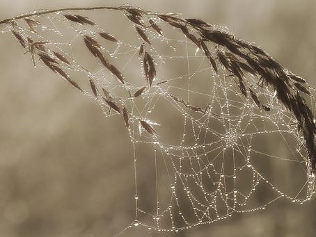 Das Netz des Lebens