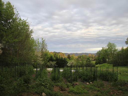 Farm Update: Spring 2020