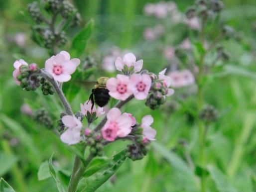 Yay Bees!