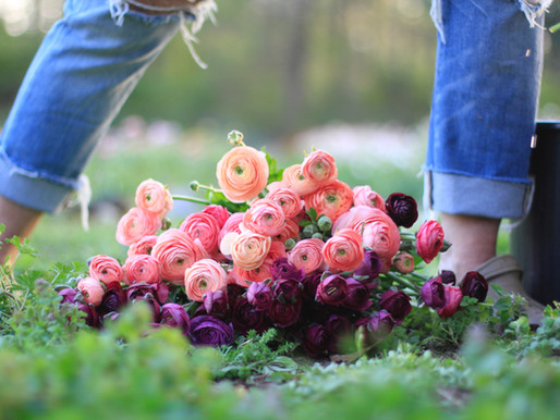 The Ranunculus Harvest