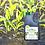 Thumbnail: BioNature Wood Vinegar