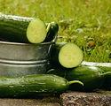 cucumbers-1588945_1280.jpg