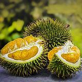 durian-3597242_1920.jpg