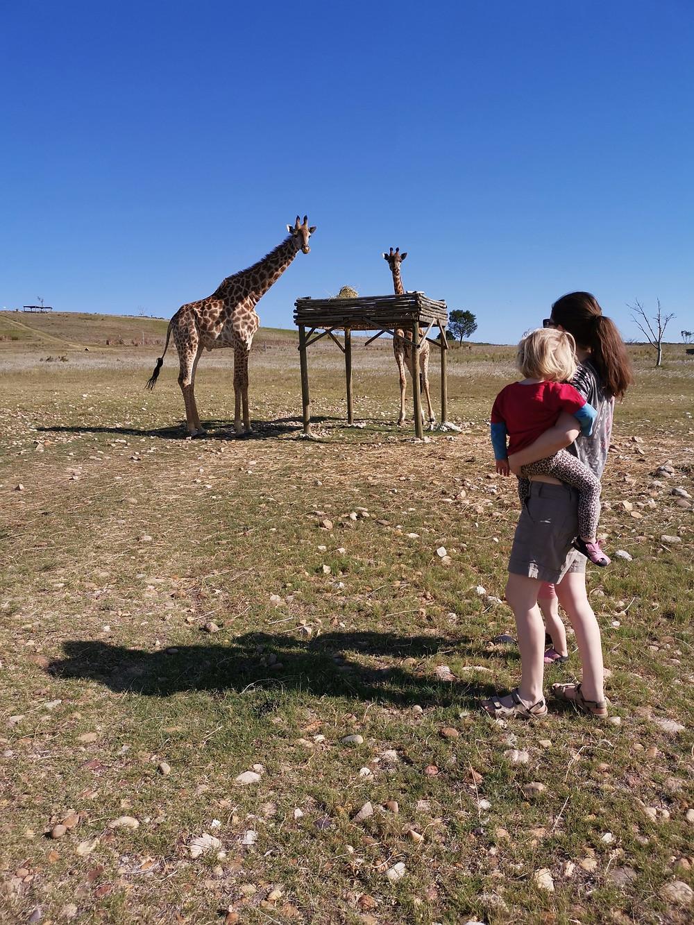 Ali Walsh with giraffe