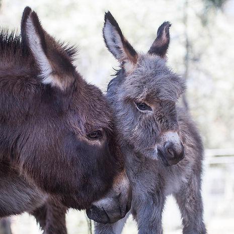 Pink_Donkeys_Oct2018_DOVEphoto_0E1A0893.