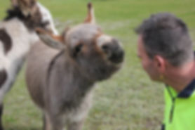 Antipodes at Donkey Tales Farm stay cottages, giving out kisses