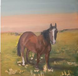 tracy's horse