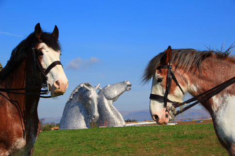 Clydesdales at the Kelpies