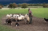 Day 11 Kingussie Leaut Farm-52-Edit.jpeg