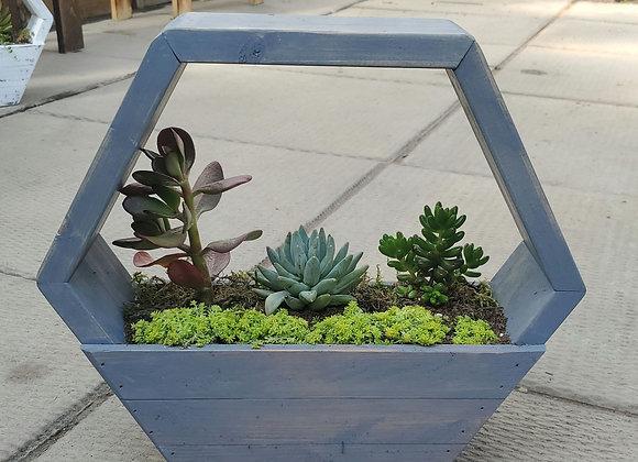Small Blue Succulent Hexagon, PL0078