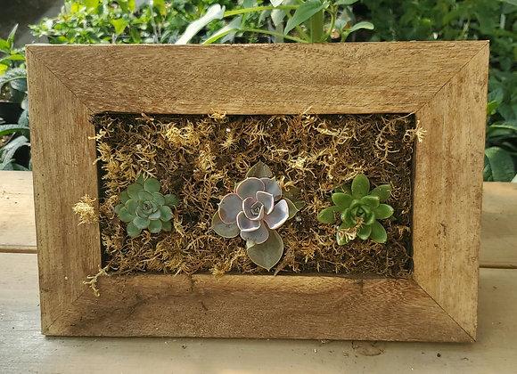 Rectangular Succulent Frame, PL0084