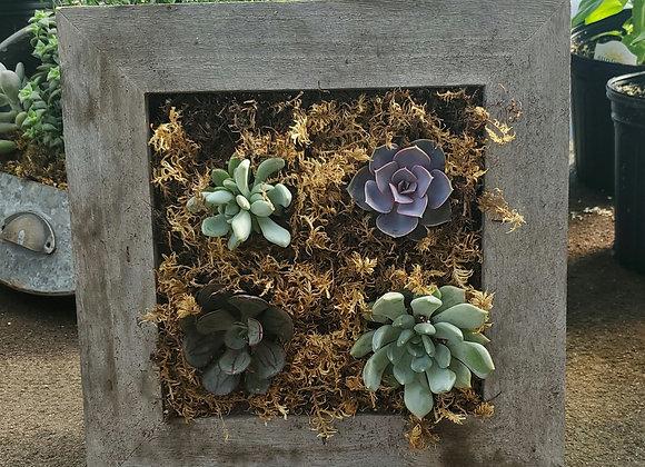 Square Succulent Frame, PL0080