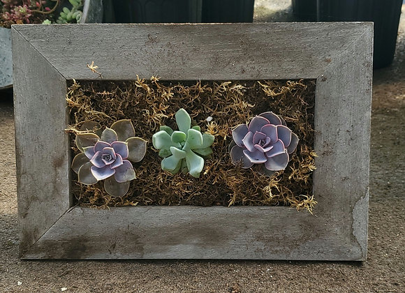 Rectangular Succulent Frame, PL0081