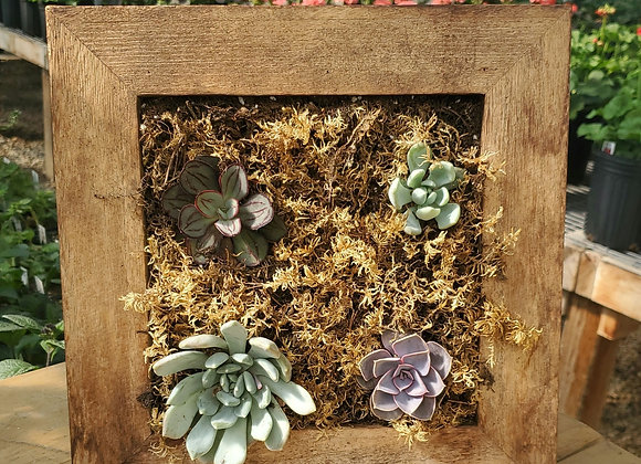 Square Succulent Frame, PL0085