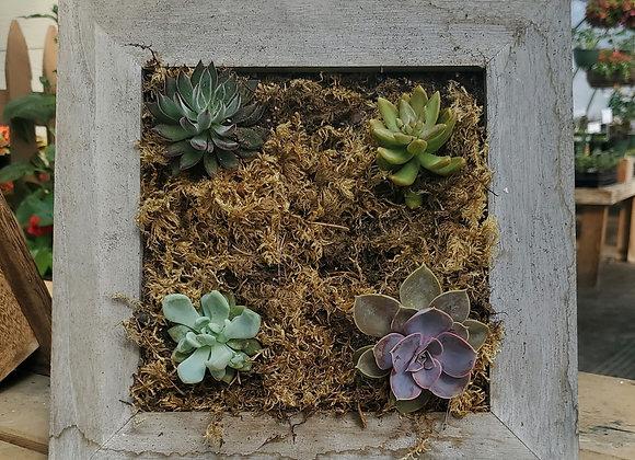 Square Succulent Frame, PL0083