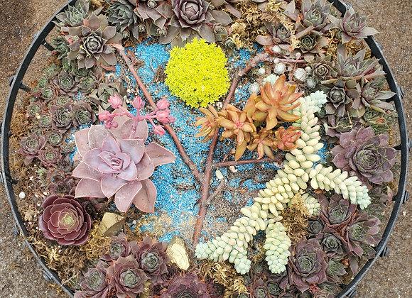 Tree of Life Succulent Bowl, PL0091