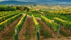 Wine area Collio
