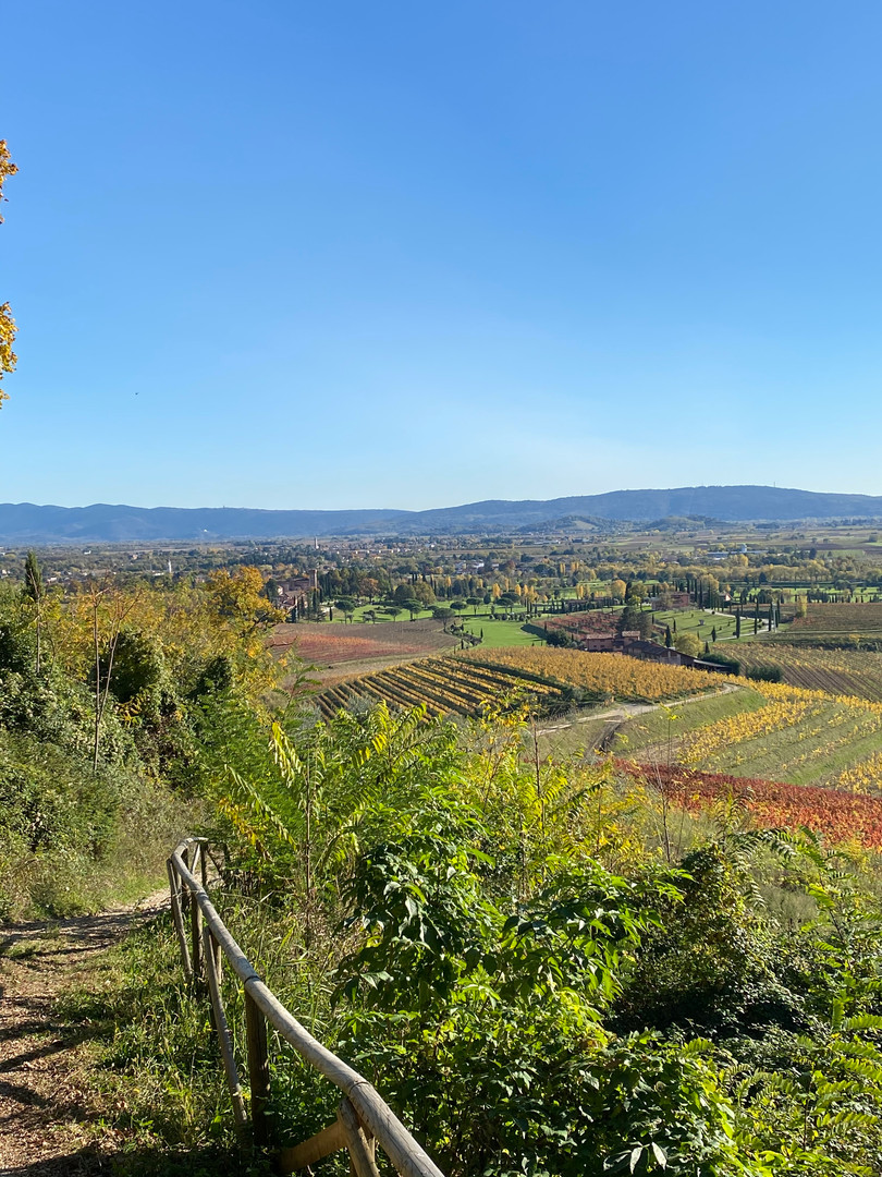 Collio wine area