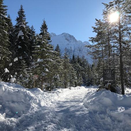 De 'forest sound track' & 'Saisera wild track' in Val Saisera