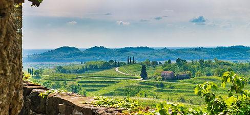 wijnen proeven in wijngebied collio in friuli