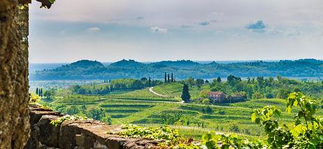 Wijn proeven in Friuli