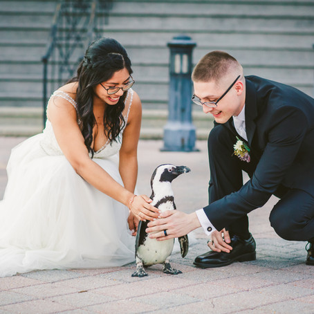 Natalie & Brian | Maryland Zoo