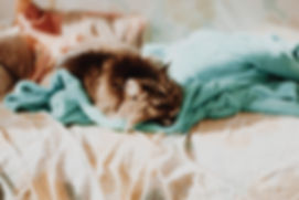cat-2605021_1920.jpg