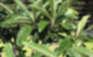 山梨県甲府市の小瀬スポーツ公園の近くで、指圧、マッサージ、鍼灸、お灸、温灸、びわの葉灸を行っている指圧鍼灸院Forestフォレストです。がんによr抗がん剤の副作用、疼痛緩和、神経痛など。